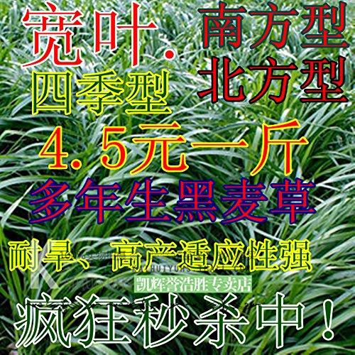 20seeds / sac spécial Tao Tanqiu ions négatifs plantation 2 génération de coeur graine d'herbe bureau créatif mini-usine