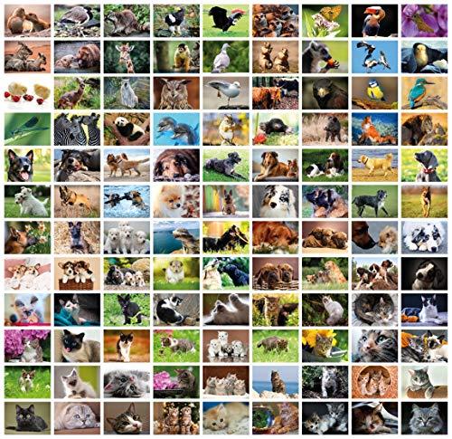 Clever Pool: 108 einfallsreiche Postkarten mit einzigartigen Tiermotiven   ausgewählte Designs und Motive   Sammelspaß für Jung und Alt   ein Postcrossing Set zum Verlieben