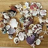 LUOLUOHUA 100 piezas de conchas mixtas del océano, decoración de bodas, conchas temáticas de playa, decoración de estrellas de mar para acuario de hogar