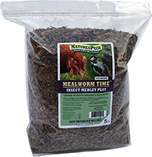 freeze dried insects bulk