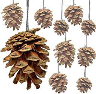BANBERRY DESIGNS Natural Pine Cones - Bag of Approx. 30 Real Pinecone Ornaments Assorted Sizes - Brown Cones with Strings - Rustic Small Pinecones Bulk - Fall Christmas 1.5 Inch to 2.5 Inch