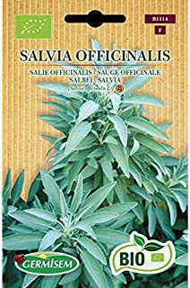 Germisem Biologico Salvia Officinalis Semi di Salvia 1 g