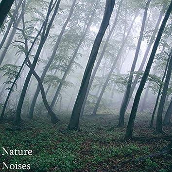 Nature Noises