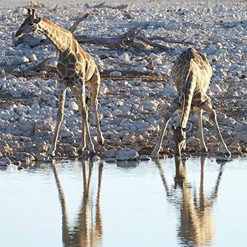 ROG000 5D Full DIY Full Painting Diamant Bohrer Riverside Animal Giraffe Diamond Malerei Handgemachtes Kristall Strass Wohnzimmer Dekor Wandkunst Handwerk 60x60cm W1388