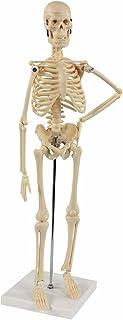 S24.1212 Mini esqueleto humano, 45cm