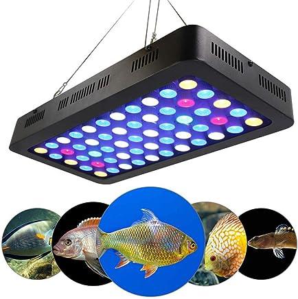 Amazon.es: MEIYANGKEJI - Iluminación de estanques y piscinas ...