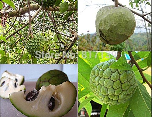 Vente! 30 graines/Sac géant pastèque Graines Graines de fruits Semer Melon d'eau non Ogm Fruits comestibles, Bi3Oid
