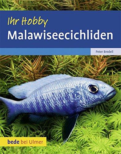 Malawiseecichliden