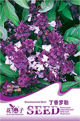 Fragrant Demure Thai Basil avec Seeds Réglisse Accent Herb, emballage d'origine, 30 graines / Pack, Organic Heady Basil D039