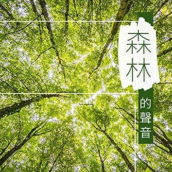 森林的聲音 - 虫鸣鸟叫,大自然聲音為了放鬆身體和早操