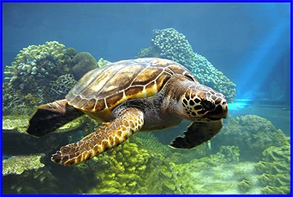 Loggerhead Sea Turtle Swims In Ocean Etched Vinyl Stained Glass Film Static Cling Window Decal