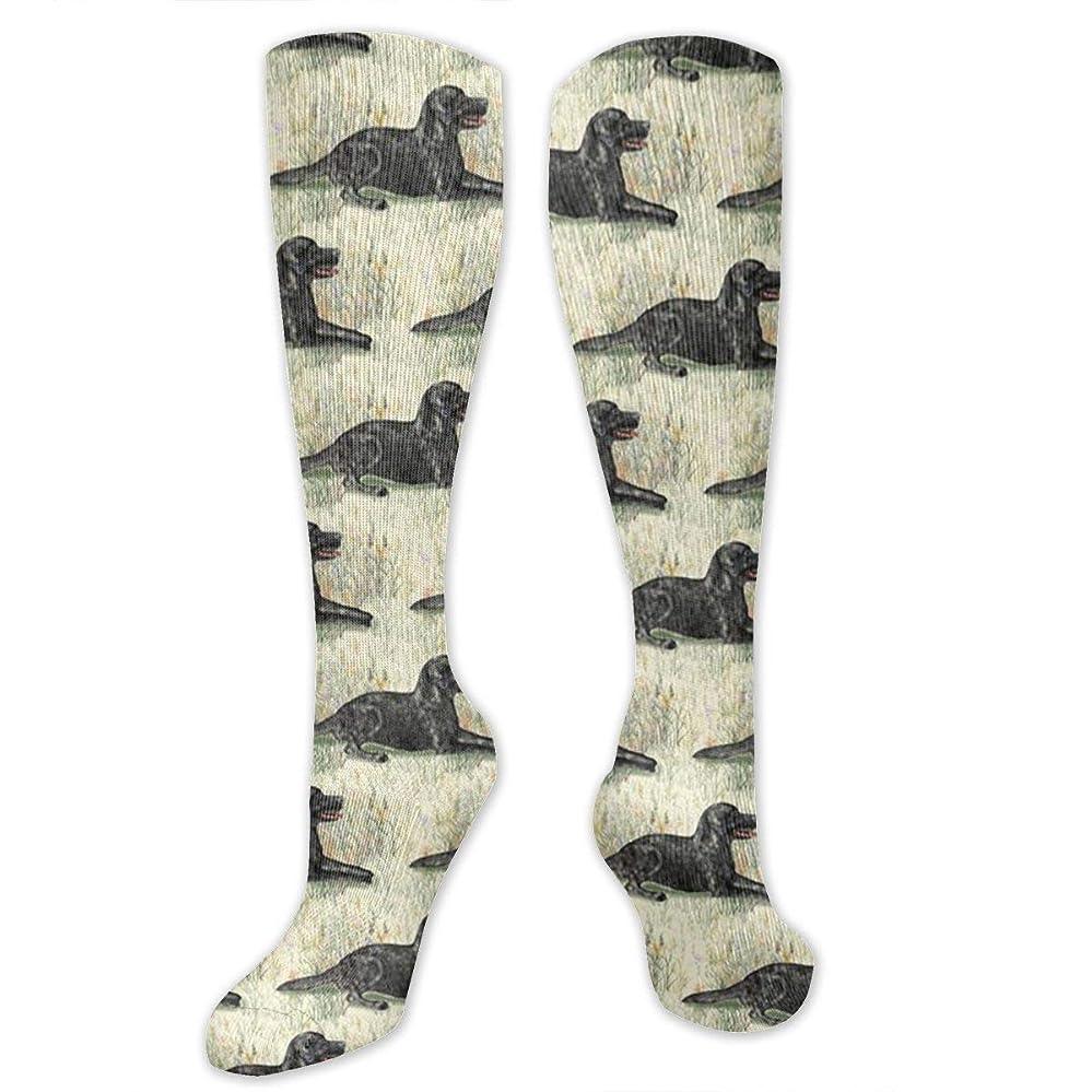 ジョブハブブトリプル靴下,ストッキング,野生のジョーカー,実際,秋の本質,冬必須,サマーウェア&RBXAA Black Lab Lying in Wildflowers Socks Women's Winter Cotton Long Tube Socks Cotton Solid & Patterned Dress Socks