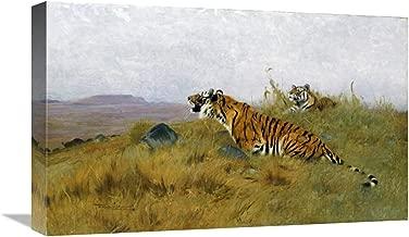 "Tigers Stalking Their Prey-Canvas Art-22""x13.684"""