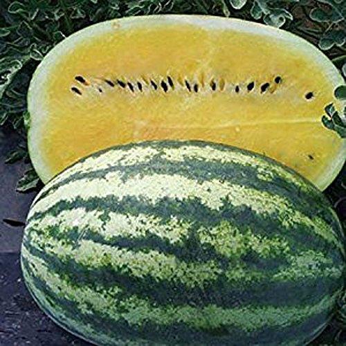 30 Pièces Semences jaune frais melon d'eau Graines plantation d'arbres fruitiers en pot Pastèque Graines de bricolage Maison et jardin plantation