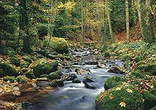 Best washington forest wallpaper Reviews