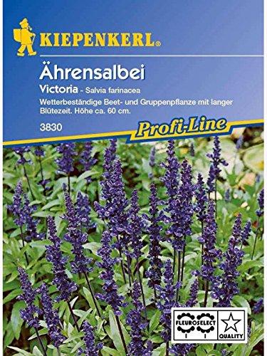 Salvia farinacea Ährensalbei Victoria...