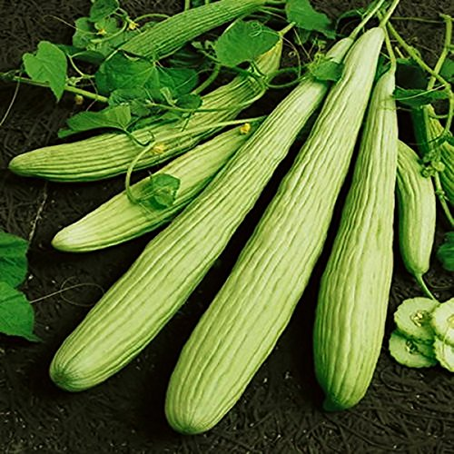 Inovey 50 Pcs/Sac Géant Long Vert De Concombre Graines Croustillantes Fruits Sucrés Graines De Légumes Biologiques