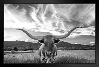Texas Longhorn Bull Standing in Pasture Close Up Black and White Photo Black Wood Framed Art Poster 20x14