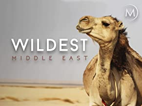 Wildest: Middle East