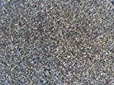 Premium Chicken Poultry Pasture Forage and Fodder Seeds (1-lb. Bag) - [33% Each: Clovers,...