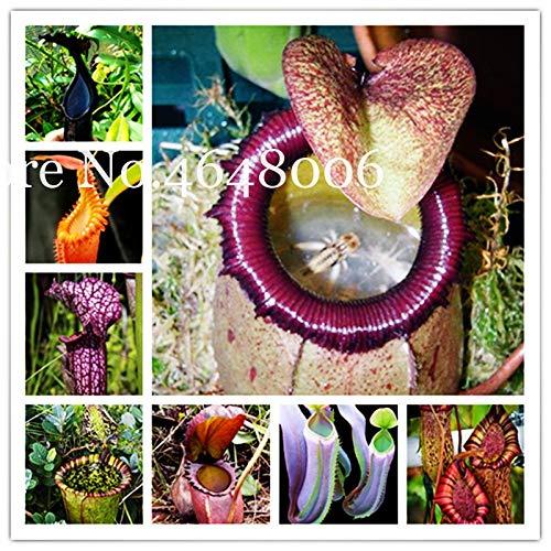 SANHOC Multifarious Nepenthes Fleisch fressende Bonsai 200 Stück Fliegenfänger muscipula Riesen Clip Venusfliegenfalle Anlage für Garten: Misch