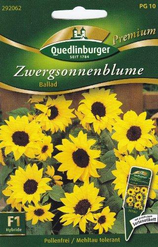 Zwergsonnenblumen, Ballad F1
