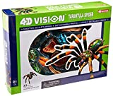 4D: Tarantula Spider Anatomy Model by John N. Hansen
