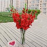 MonkeyJack Artificial Plants & Flowers Wedding Flower Gladioli Gladiolus stem 8 Colors - Red, 80cm