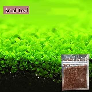 トトハウス(TOTO HOUSE)水族館 水草シード 植物の種子 水生植物 水槽装飾 葉植物 水族館装飾 観賞用 増殖スピードの速さ (1)