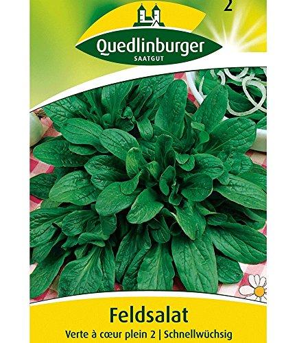 Feldsalat 'Dunkelgrüner vollherziger 2', 1 Tüte Samen