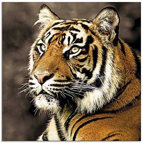 Artland Glasbilder Wandbild Glas Bild einteilig 30x30 cm Quadratisch Asien Dschungel Tiere Tiger Fotografie Tigermuster S6JL