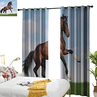 Simple Curtain Horses Bay Horse Pacing on The Grass Energetic Noble Character of The Nature Concept Home Garden Bedroom Outdoor Indoor Wall Decorations W84 x L96 Blue Green Brown