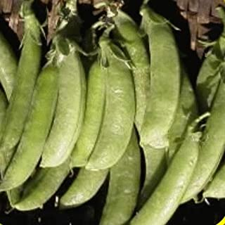 GEOPONICS 150 ugar semences pois