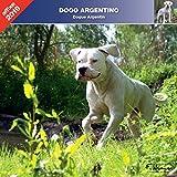 Argentinische Dogge 2019 – Kalender Affixe
