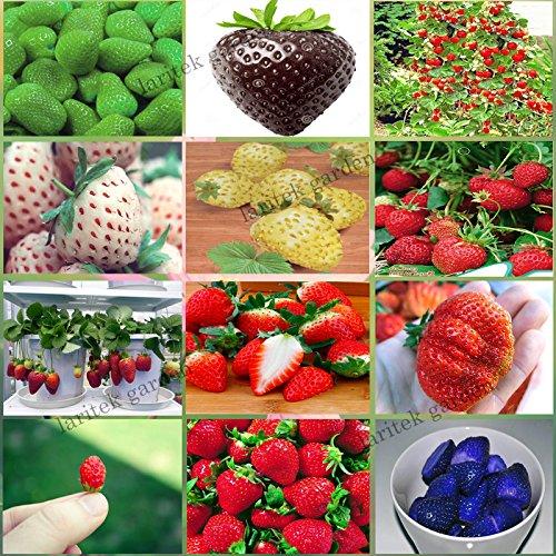 12 Packs différents Graines de fraise (vert, blanc, noir, rouge, bleu, Giant, Mini, Bonsai, Normal Rouge, Pineberry) e3508