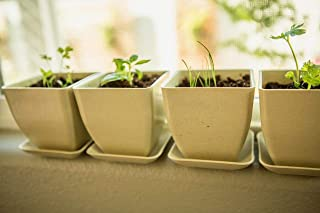 Organic Herb Garden Starter Kit - Indoor Herb Garden Growing Kit with Organic, Non GMO Seeds; Basil, Parsley, Cilantro and Chive, Compact Soil Discs, Reusable Bamboo Fiber Pots and Plant Markers!