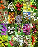 Florida Native Berries Mix, Sold By EXOTIC CACTUS Exotic Wild Berry Rare Fruit Wood Seed 50 Seeds Package