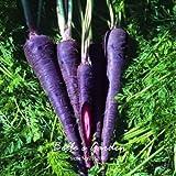 100pcs púrpura zanahoria Semillas Semillas de vegetales orgánicos Heriloom Daucus carota bricolaje Semillas Huerto Vegetal