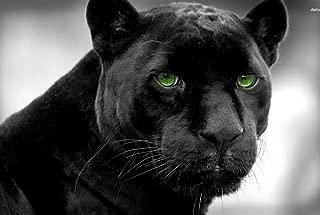 DZ.HAIKA Black Panther (N33) - Animal Picture Art Print Canvas Poster(13x19.5inch)