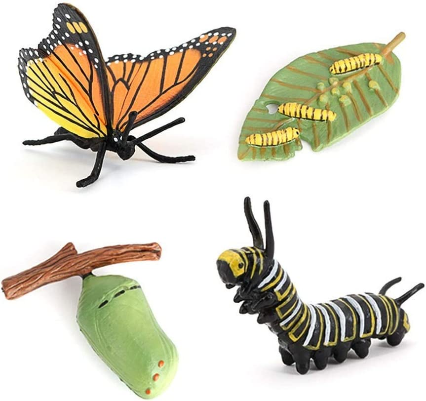 MODEBESO 4PCS Directly managed store Monarch Department store Butterfly Animal Insect Life Cycle Growth