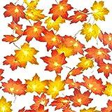 Herefun Hojas de Otoño, 6M 40Leds Guirnaldas Luminosas Hoja de Arce Artificial, Luces Decoracion Halloween, Hoja de Arce Luz Cadenas, Guirnalda de Otoño Decoración al Aire Libre (2)