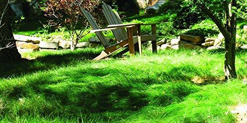 Nature s Seed S-FEOV-50LB Sheep Fescue Grass, 50 lb, Brown A