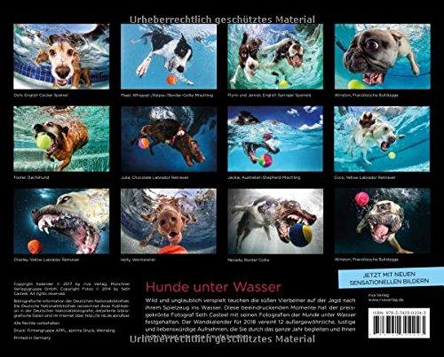 Hunde unter Wasser 2018: Wandkalender - 2