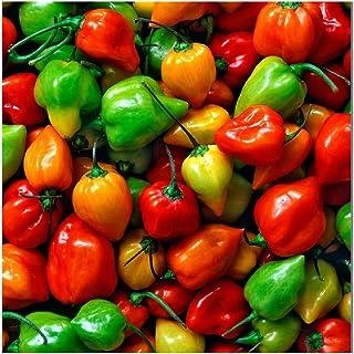 David`s Garden Seeds Pepper Hot Habanero Rainbow Mix SL1663 (Multi) 50 Non-GMO, Heirloom Seeds