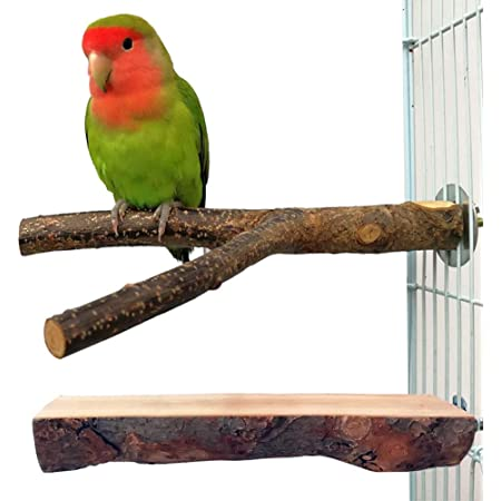 B Blesiya Bird Parrot Perch Stand Holder Natural Wood Toys Grinding Toy Pet Cage Nest with a Coconut Shell Bowl Parakeet Hamster Ferret Squirrel Feeding