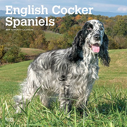 English Cocker Spaniels 2019 12 x 12 Inch Monthly Square Wall Calendar, Animals Dog Breeds (Multilingual Edition)
