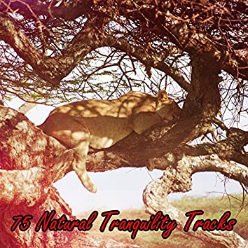 75 Natural Tranquility Tracks