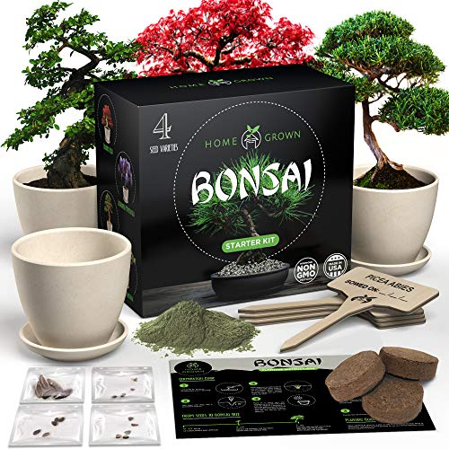 HOME GROWN Bonsai Tree Kit. Bonsai Tree Starter Kit with 4 Seeds Types, incl. Purple Bonsai Tree! Indoor Growing Plant Gifts for Moms Who Have Everything, Seed Starter Kit for Kids, DIY Adult Crafts