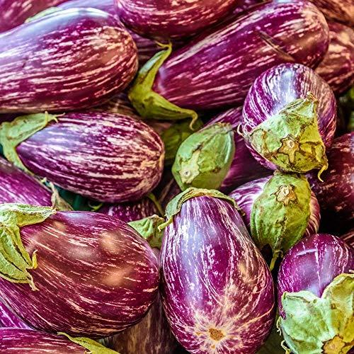 Samen für ca. 20 Pflanzen Listada de Gandia Aubergine – lavendelfarbige, gestreifte Früchte