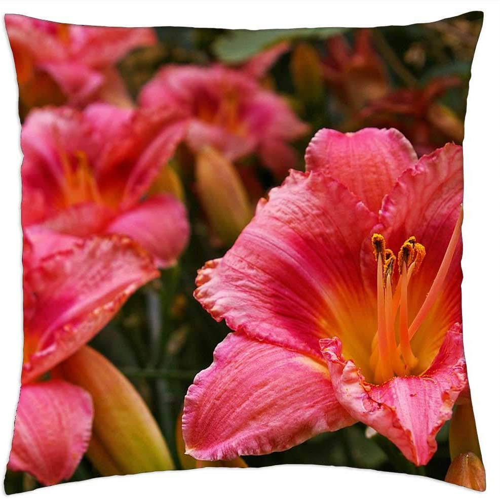 LESGAULEST Columbus Mall Limited time sale Throw Pillow Cover 24x24 inch Daylily Blossom - Blo